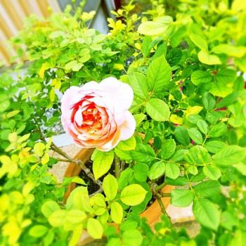 Fotor_15711959067911